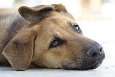 dog-ate-poison-183767881-resized